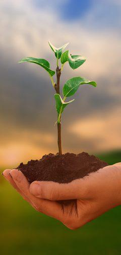 Política da qualidade do meio ambiente